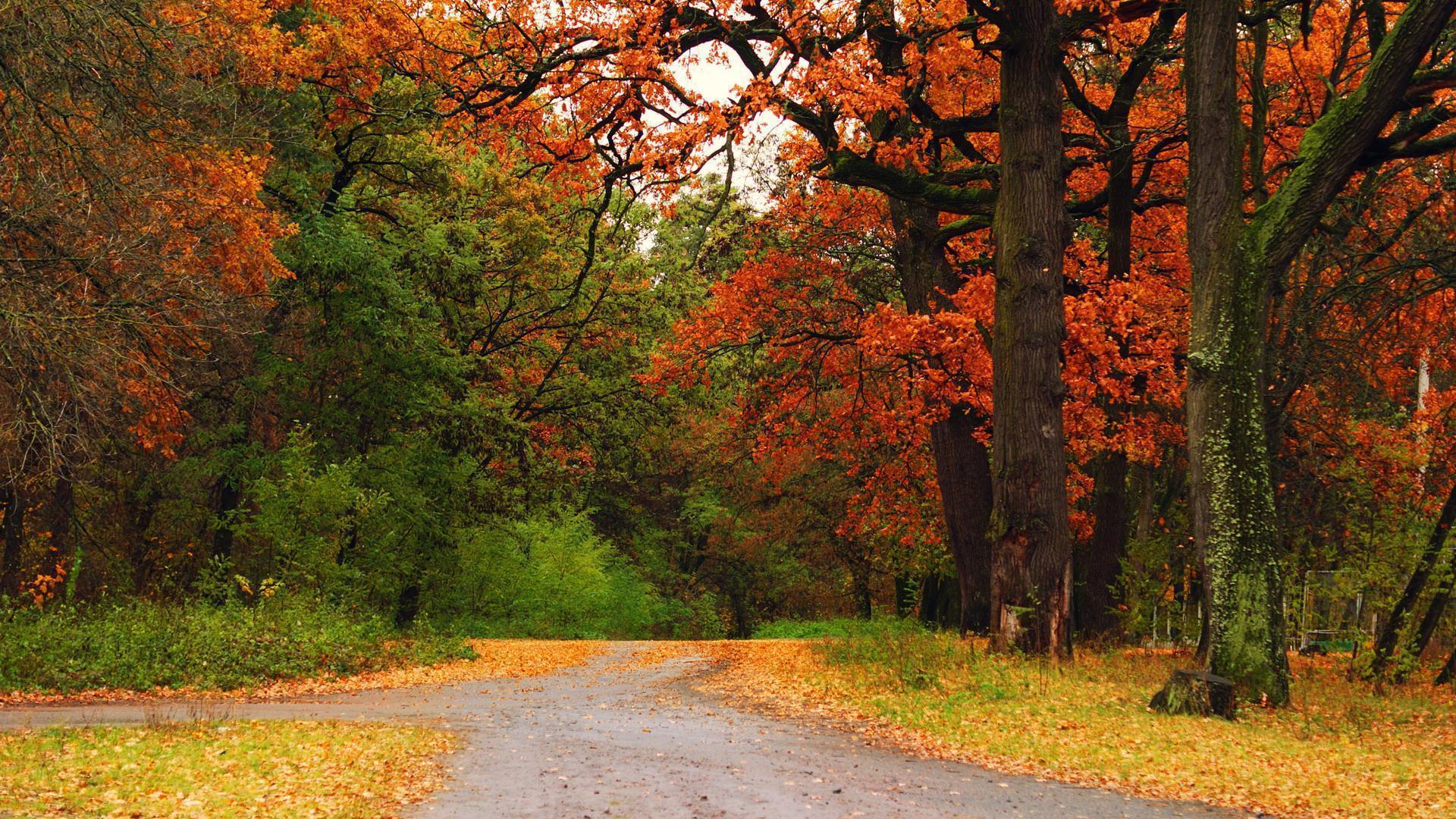 beautiful fall scenic view - photo #7