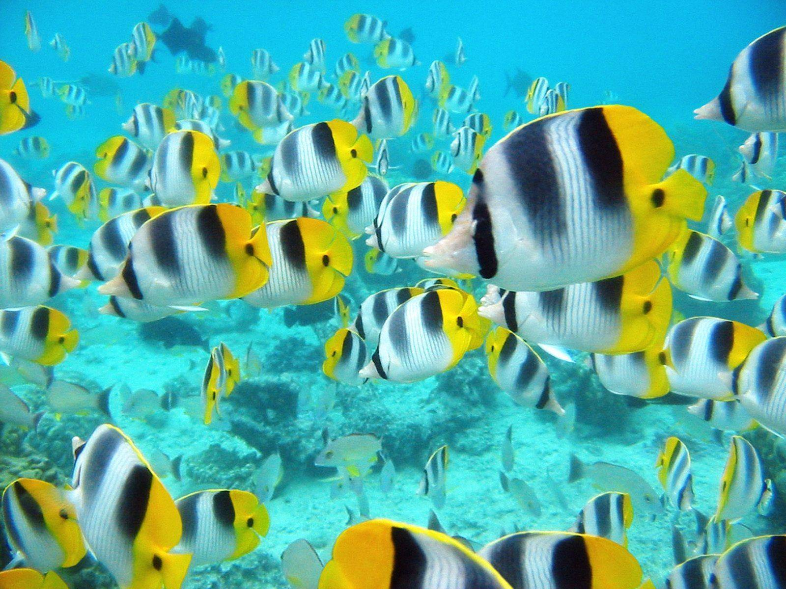 Marine Life Wallpapers