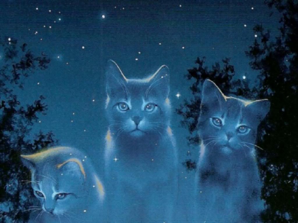 Warriors cats backgrounds wallpaper cave - Cool backgrounds of cats ...