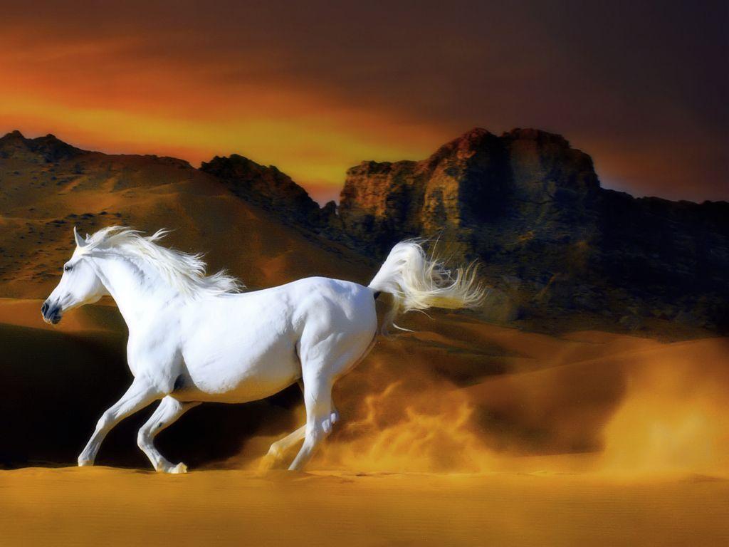free horse screensavers and - photo #8