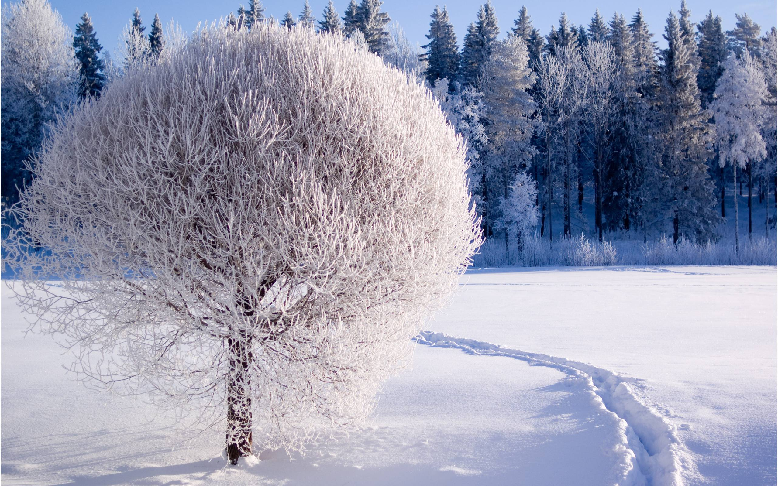 1682 Winter Wallpapers | Winter Backgrounds
