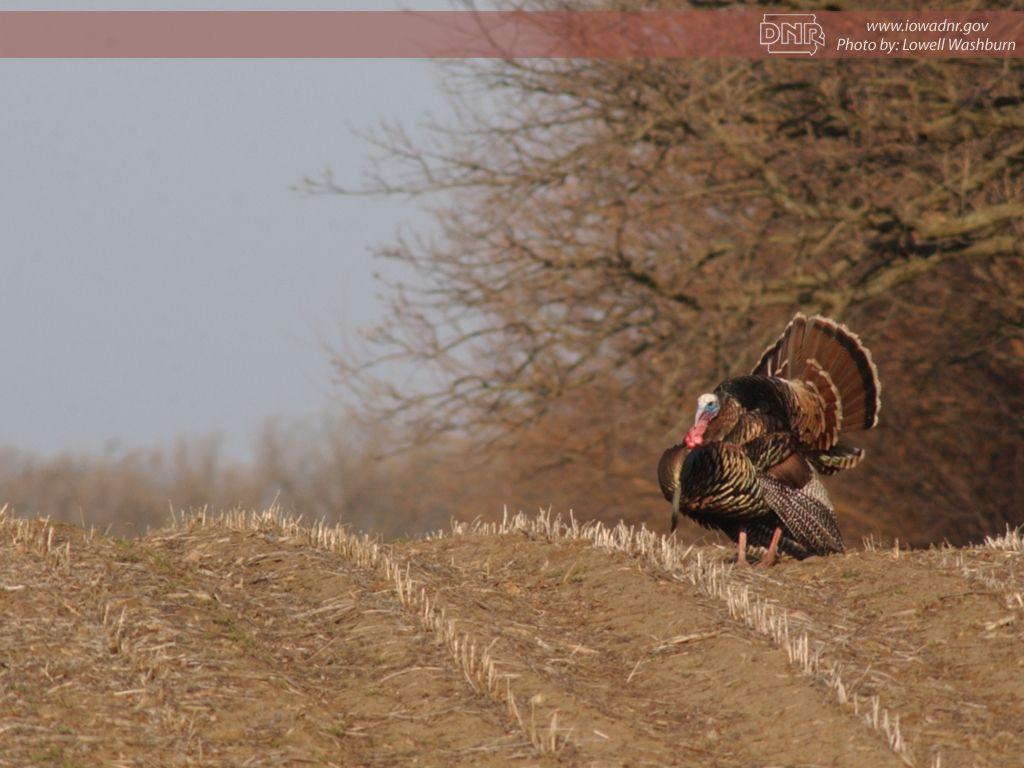 turkey picture wallpaper for - photo #19