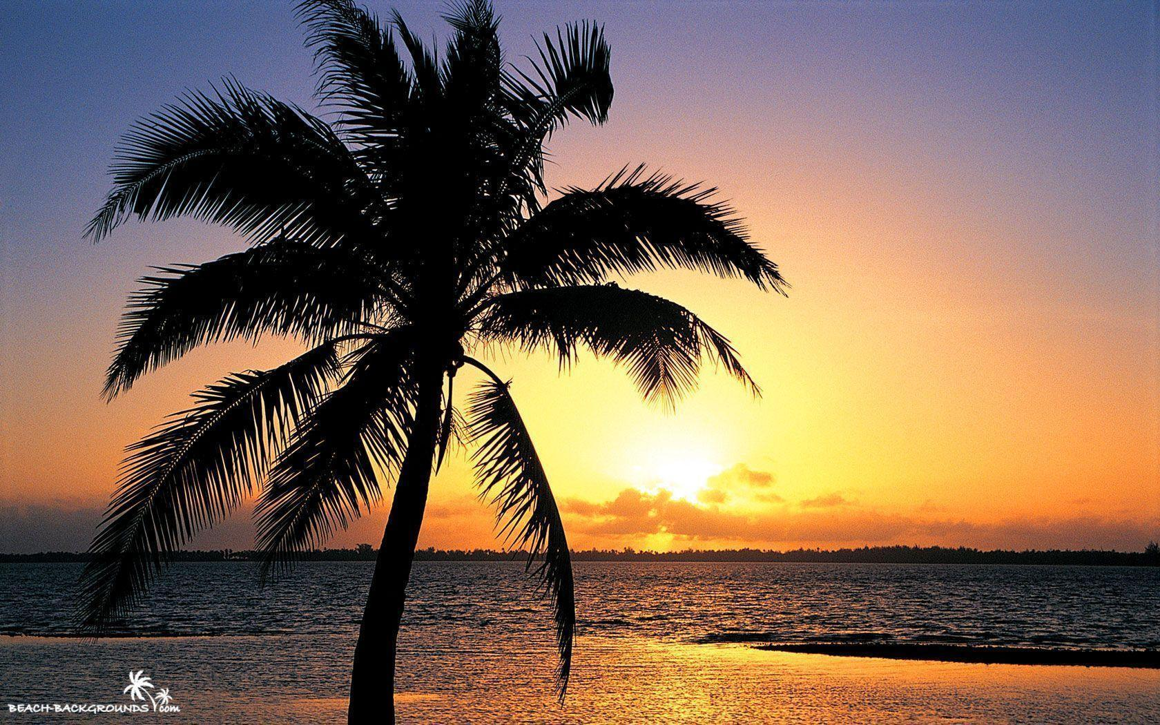 Beach Sunset Backgrounds 33170 Hd Wallpapers in Beach n Tropical ...