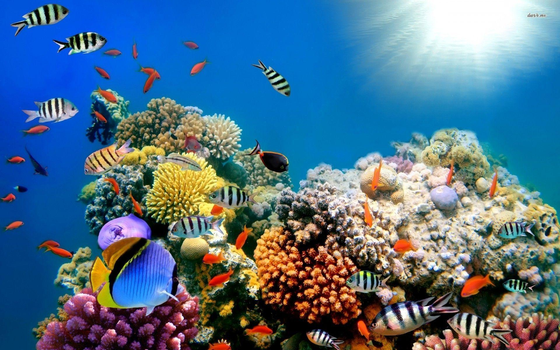 Reef wallpapers wallpaper cave for Red fish blue fish key west