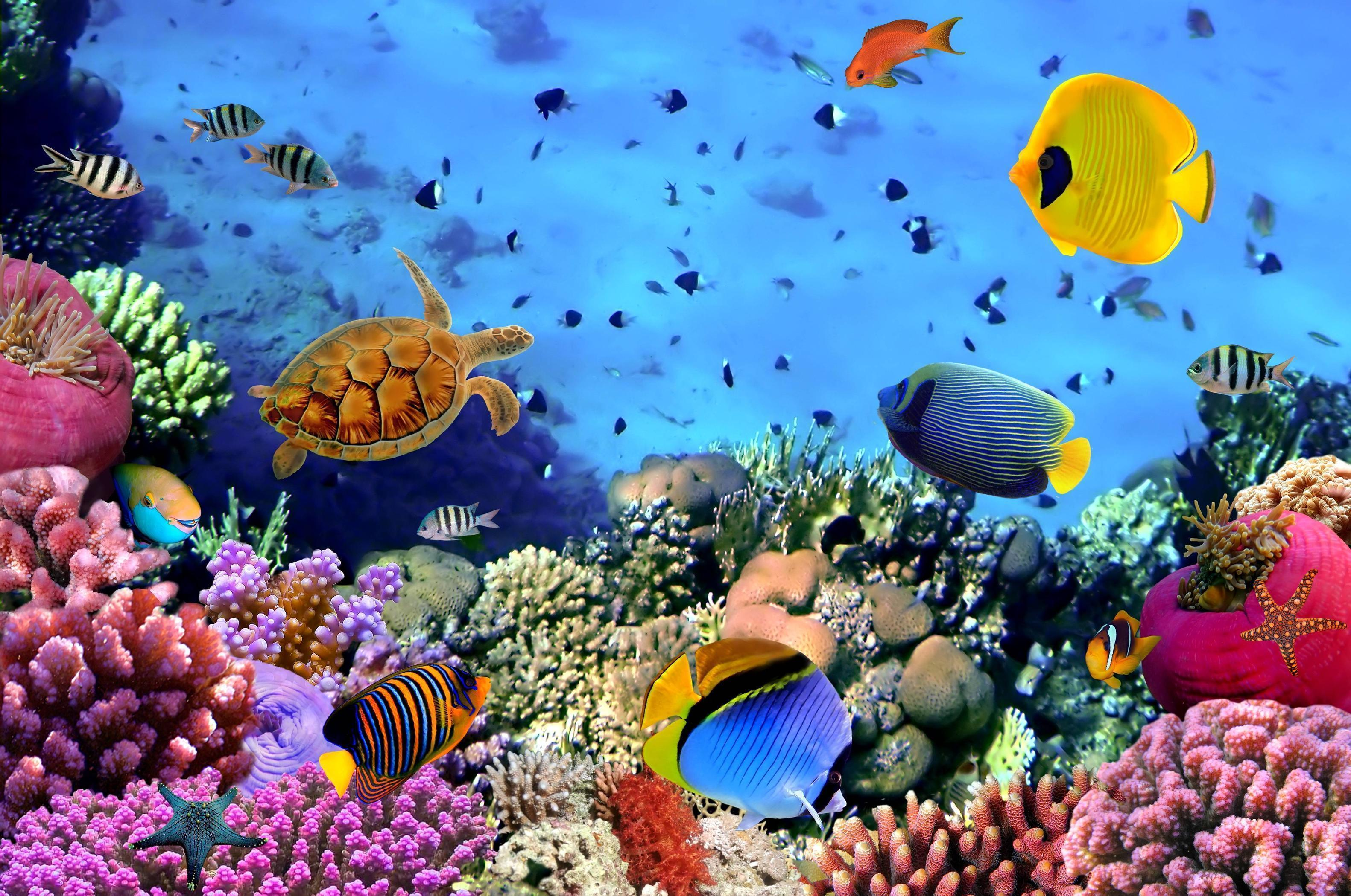 Underwater desktop backgrounds wallpaper cave - Underwater desktop background ...