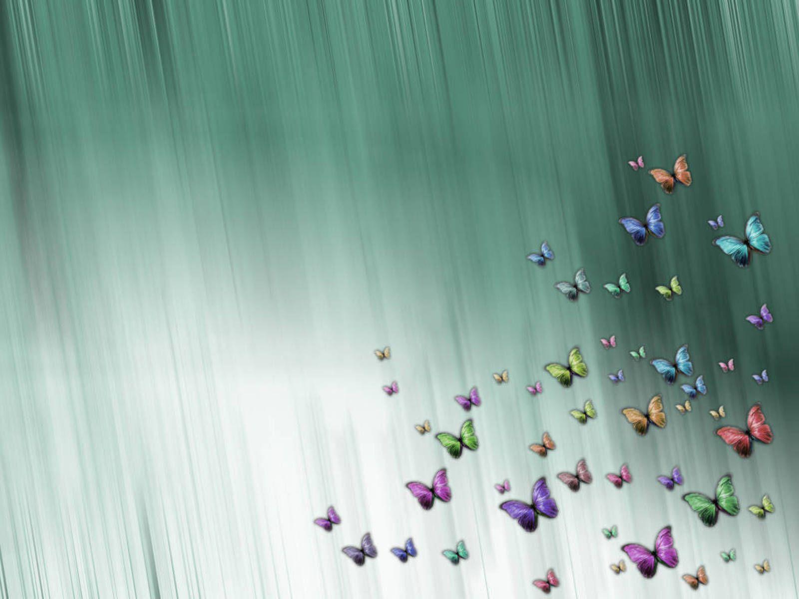 beautiful butterfly hd desktop - photo #20
