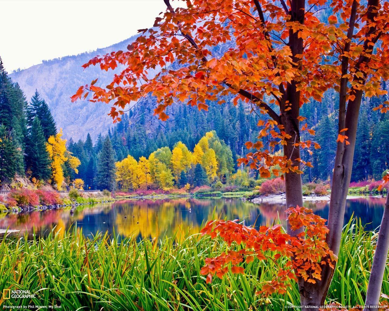Fall Foliage Desktop Wallpapers Wallpapers Fever 1280x1024PX