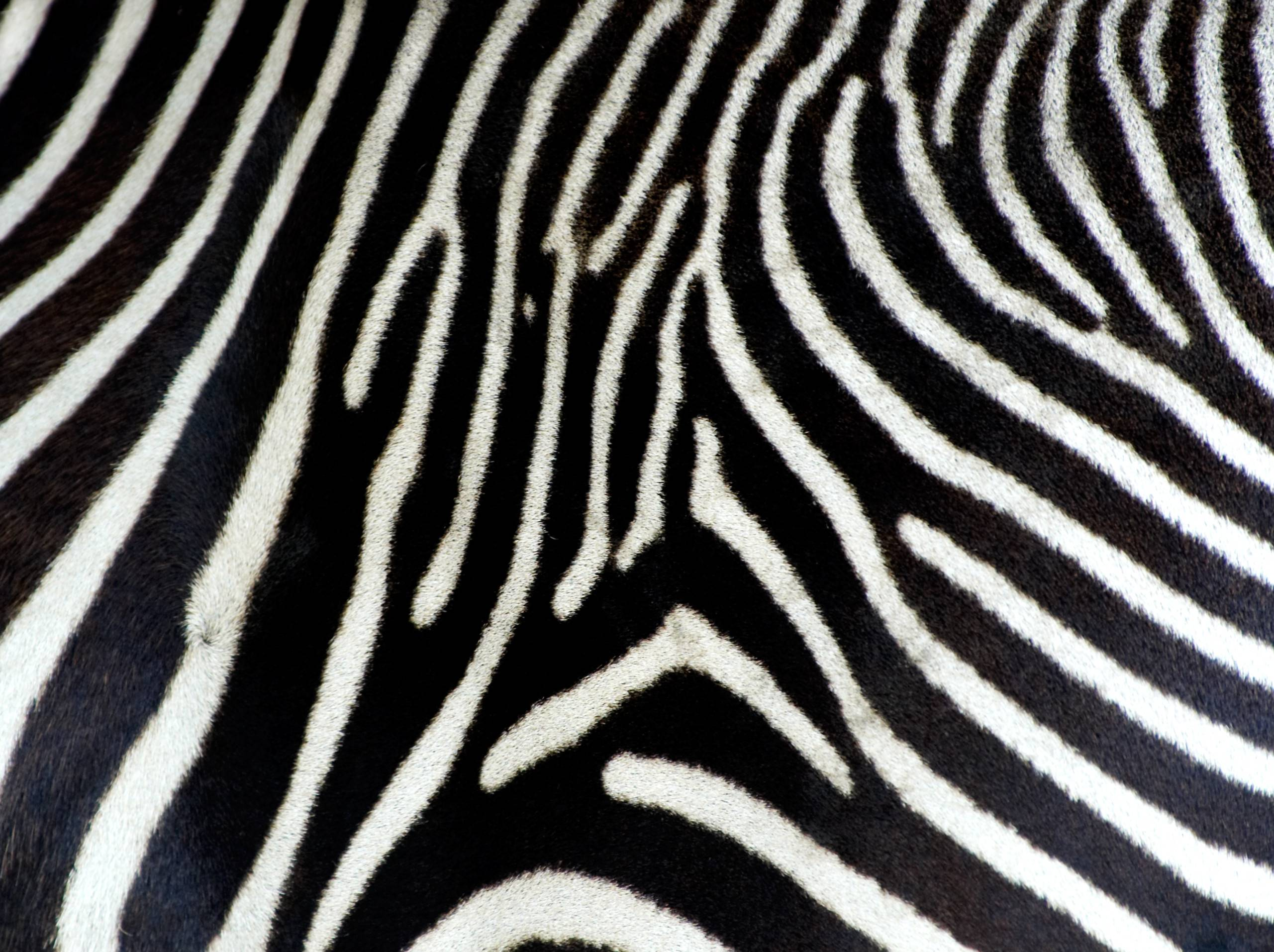 Animal Print Fabric Amazoncom