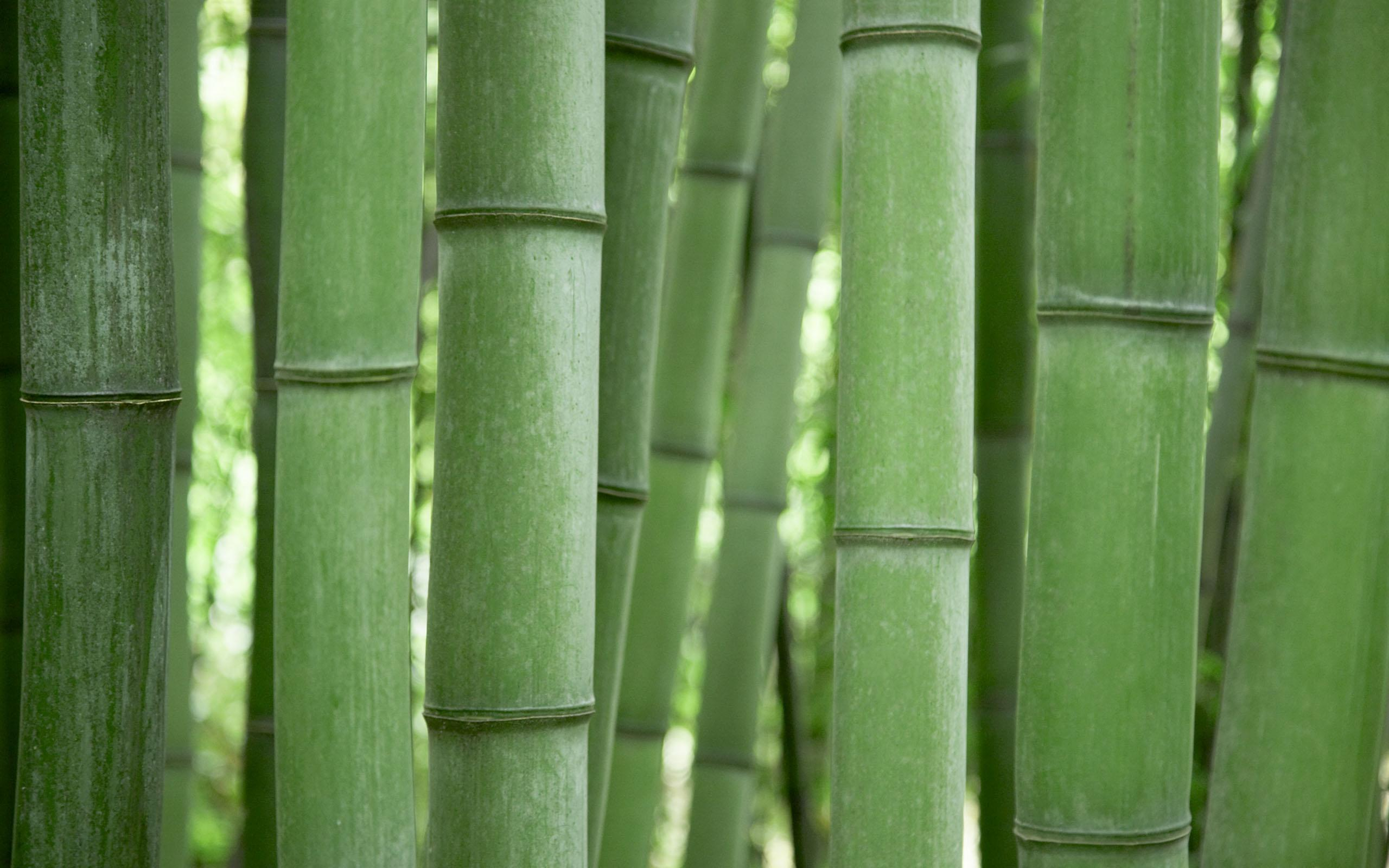 bamboo wallpaper by doantrangnguyen - photo #13