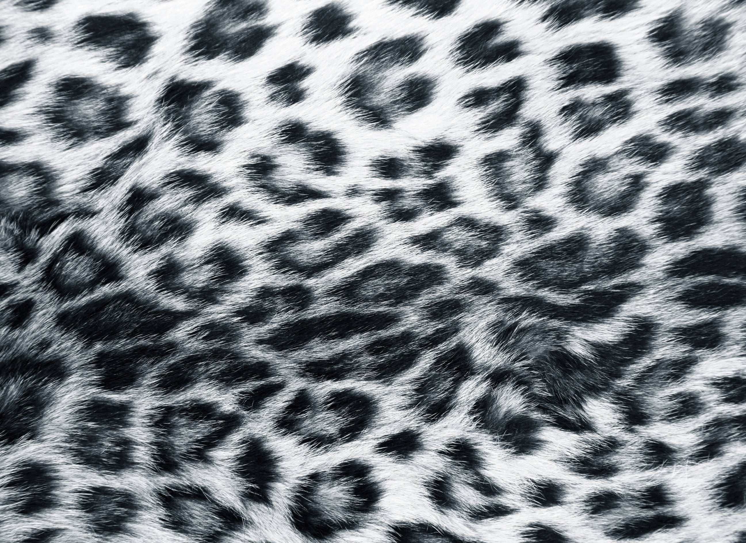 White cheetah print - photo#27