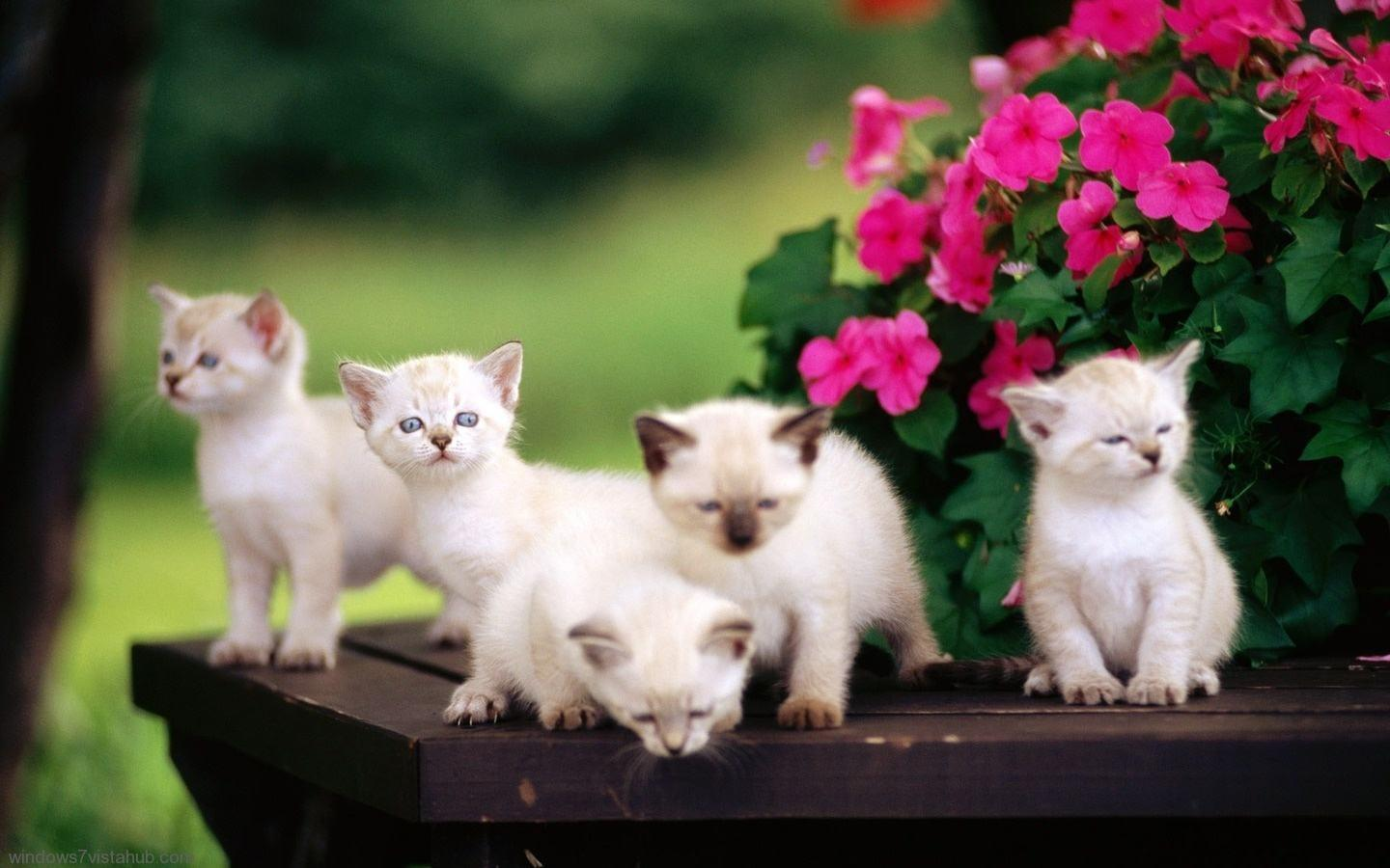 free cute kitten wallpapers wallpaper cave