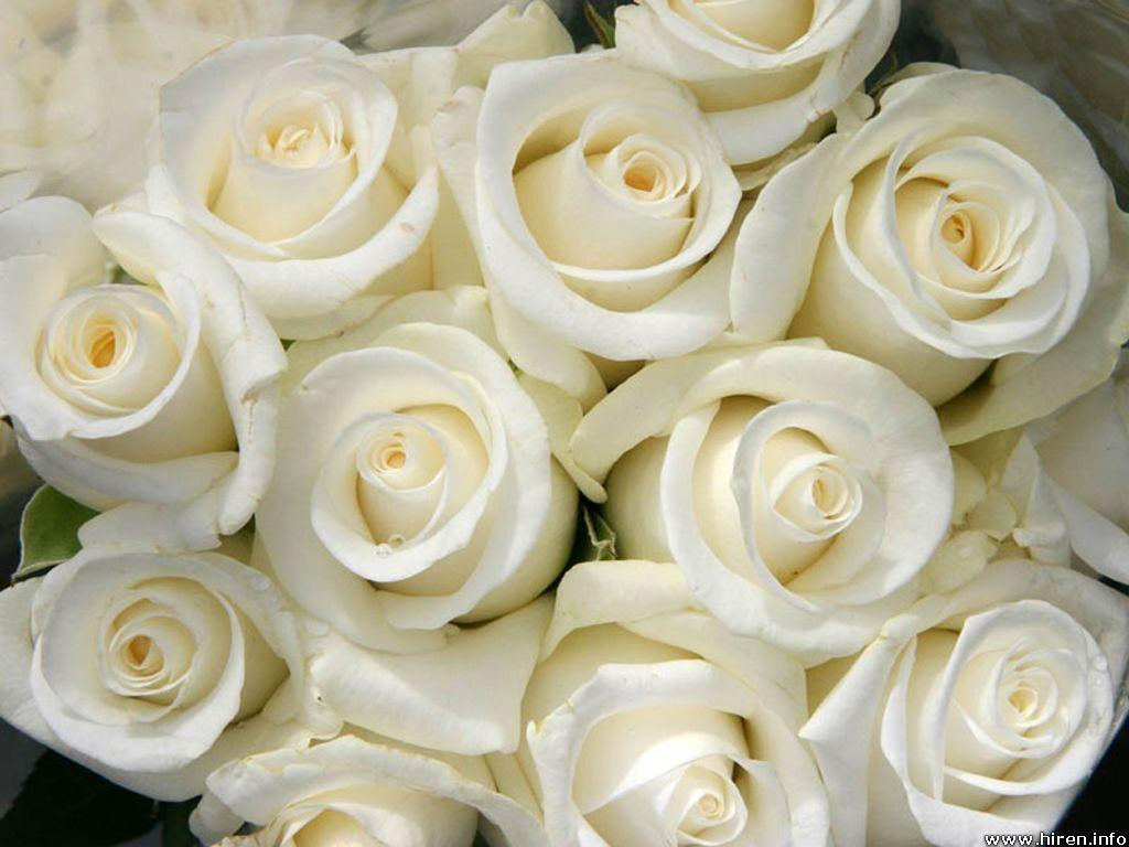 Wallpapers For > Bunch Of White Roses Wallpapers