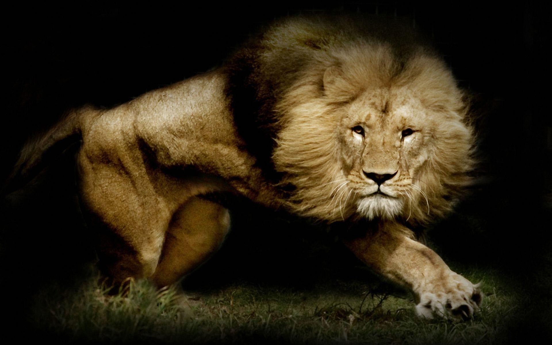 Lion Computer Wallpapers, Desktop Backgrounds 1920x1200 Id: 322877