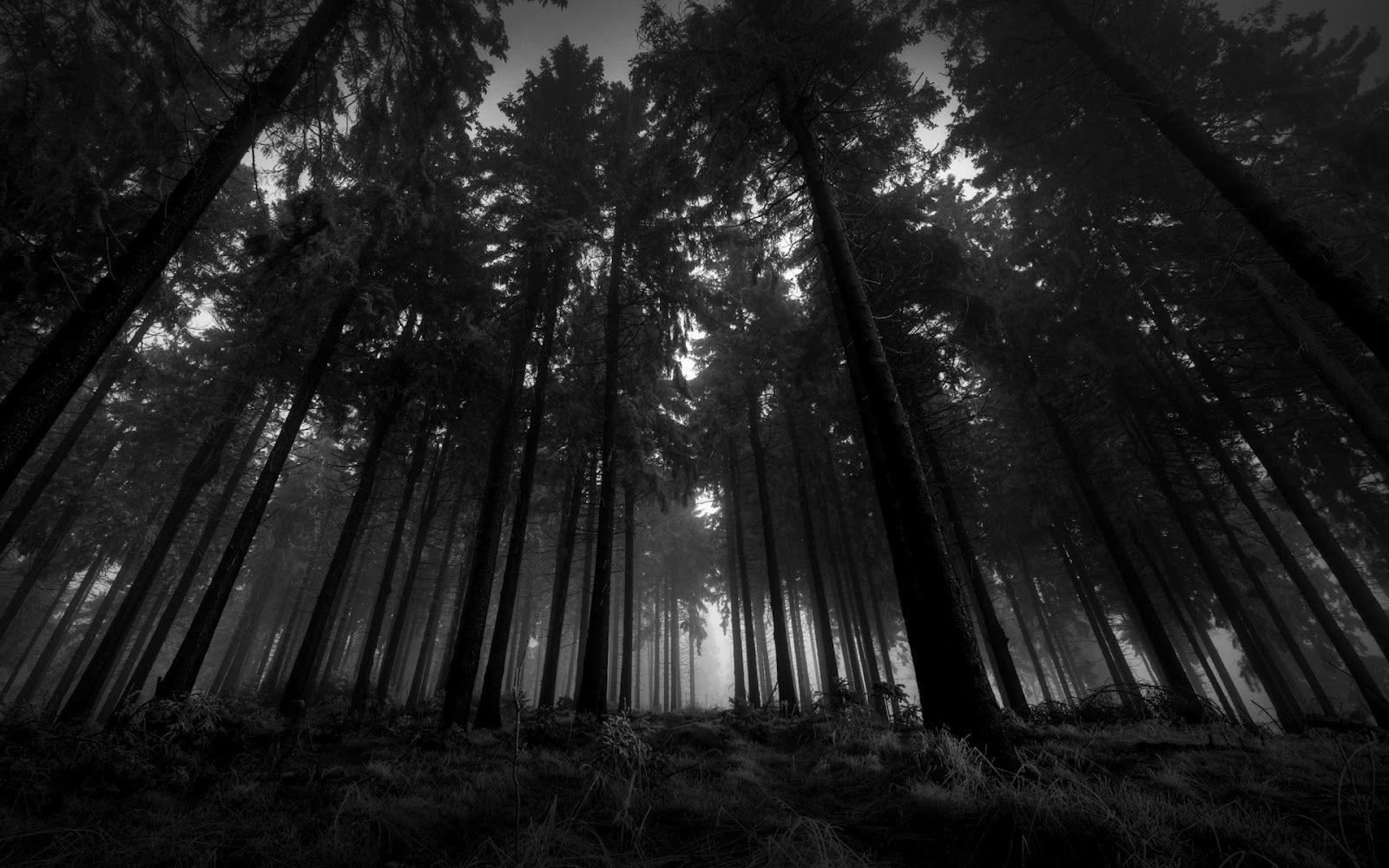 Forest Wallpapers Black And White Download 44585 HD Pictures