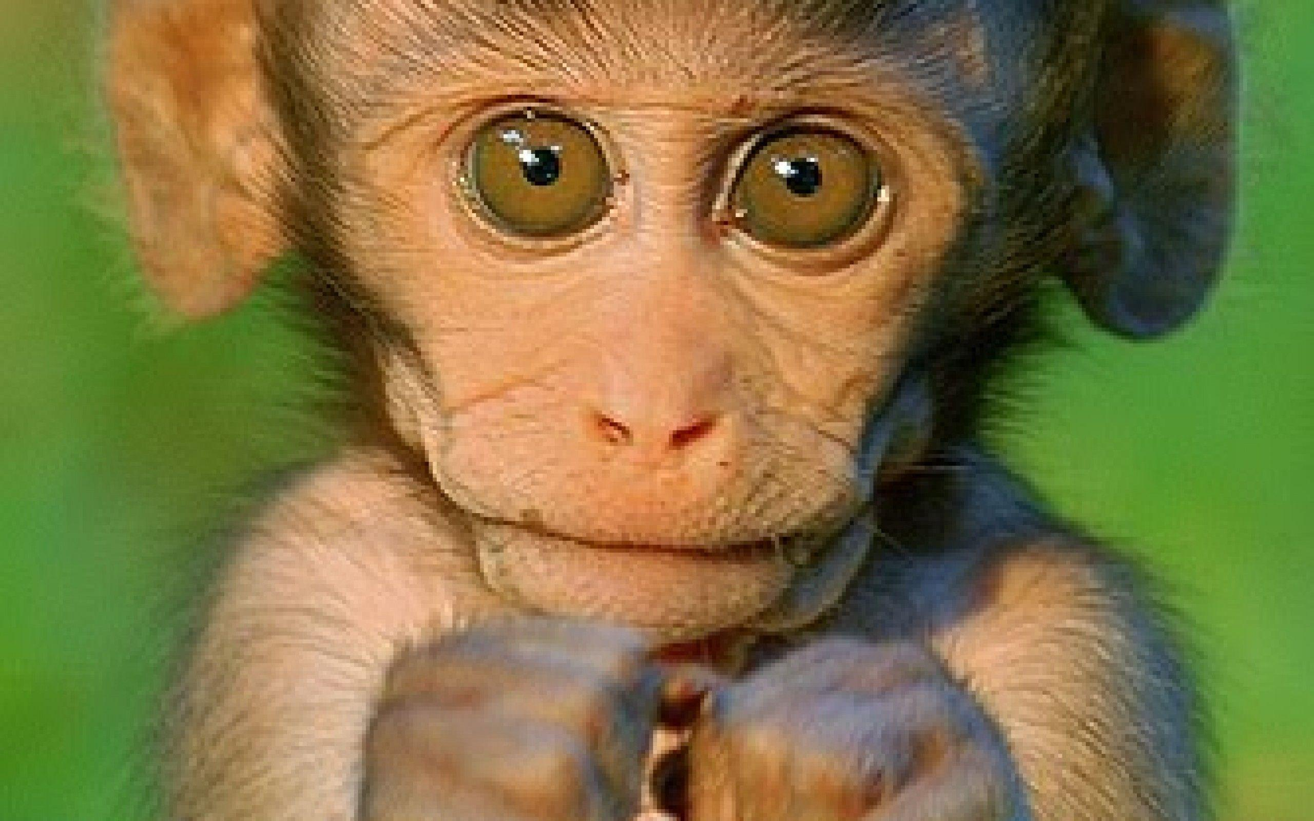 cute monkey wallpapers wallpaper cave