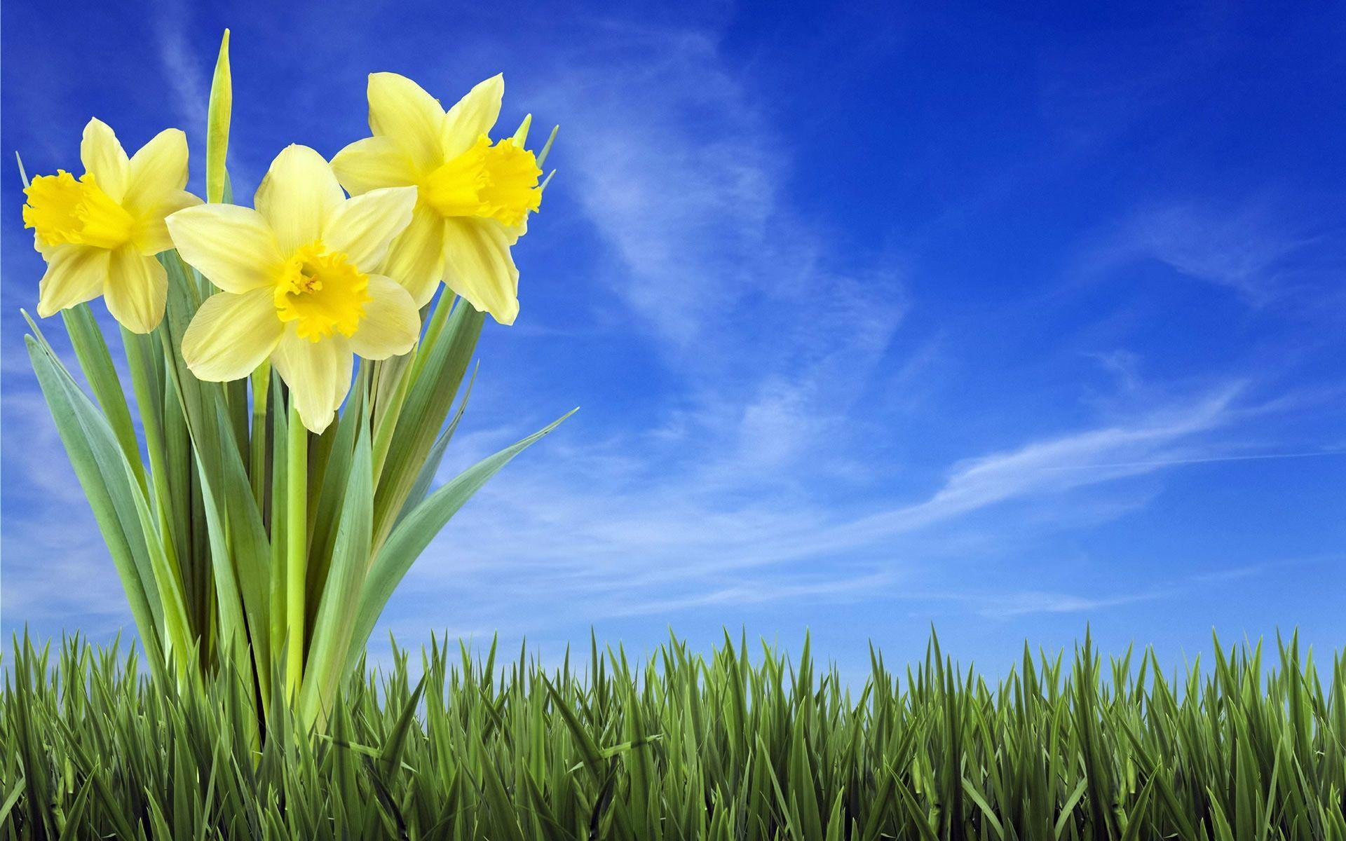 Spring Backgrounds Image