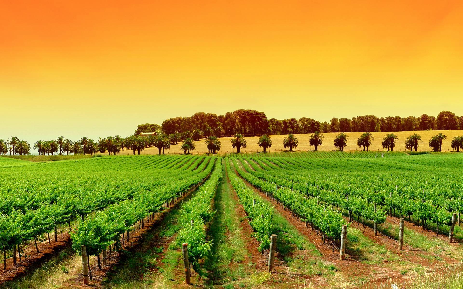 unique vineyard vines wallpaper ideas home decor ideas