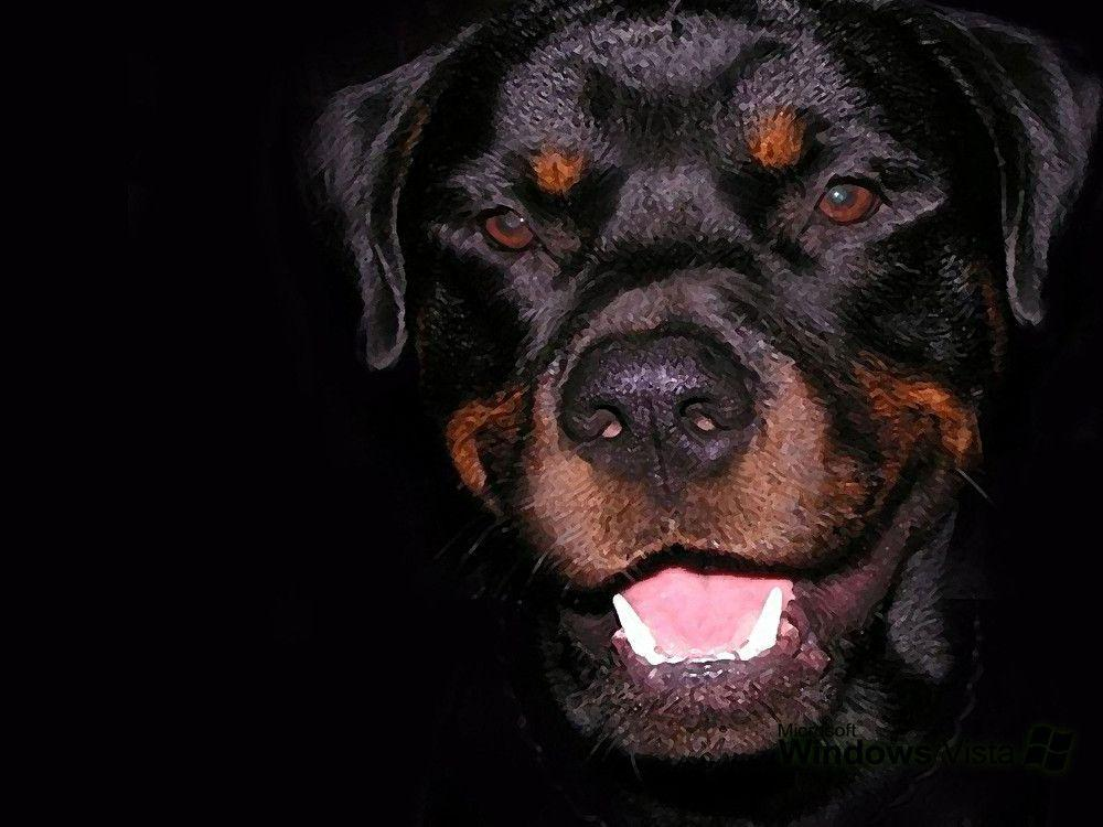 Rottweiler Wallpapers Wallpaper Cave HD Wallpapers Download Free Images Wallpaper [1000image.com]
