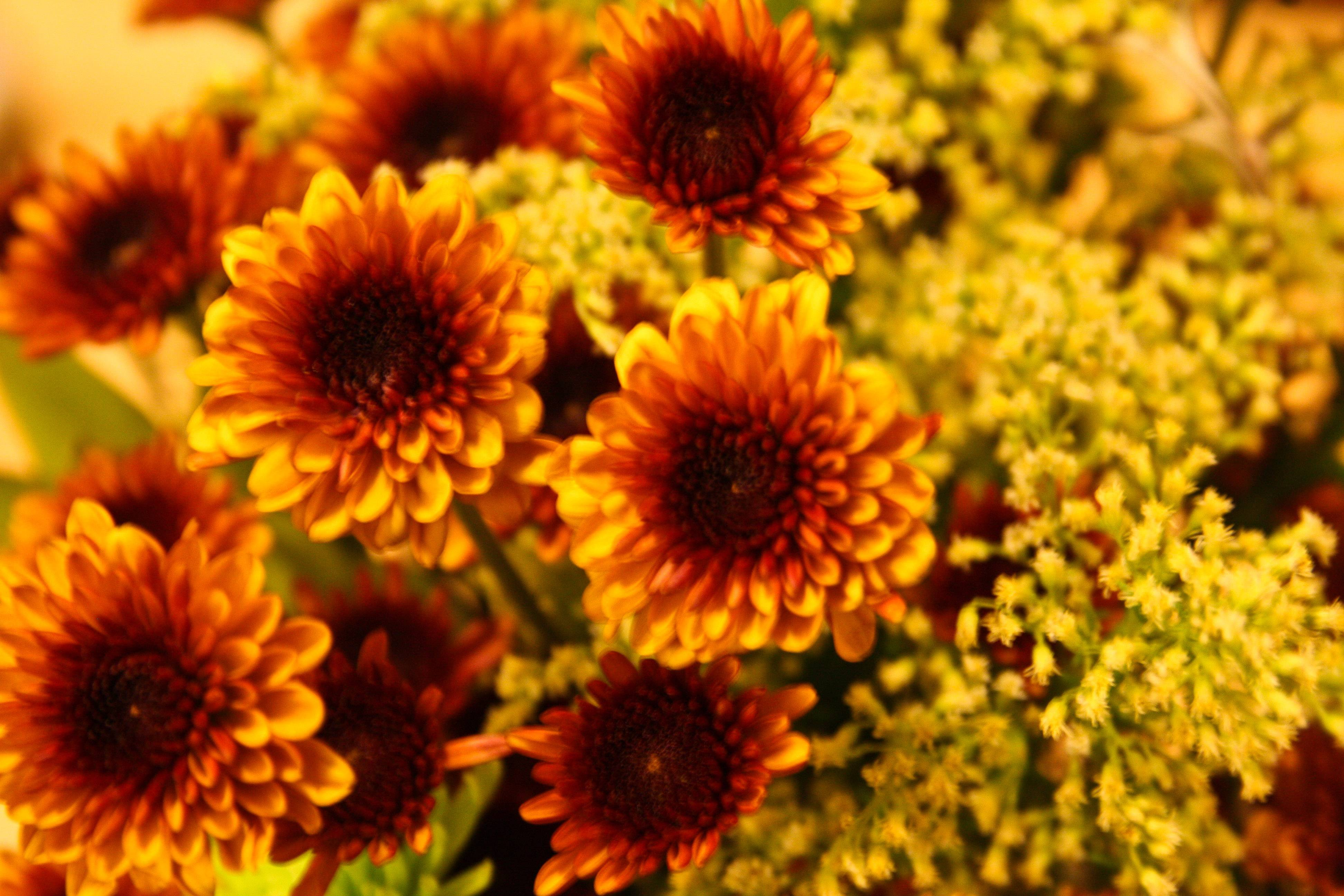 fall flowers wallpaper by - photo #8
