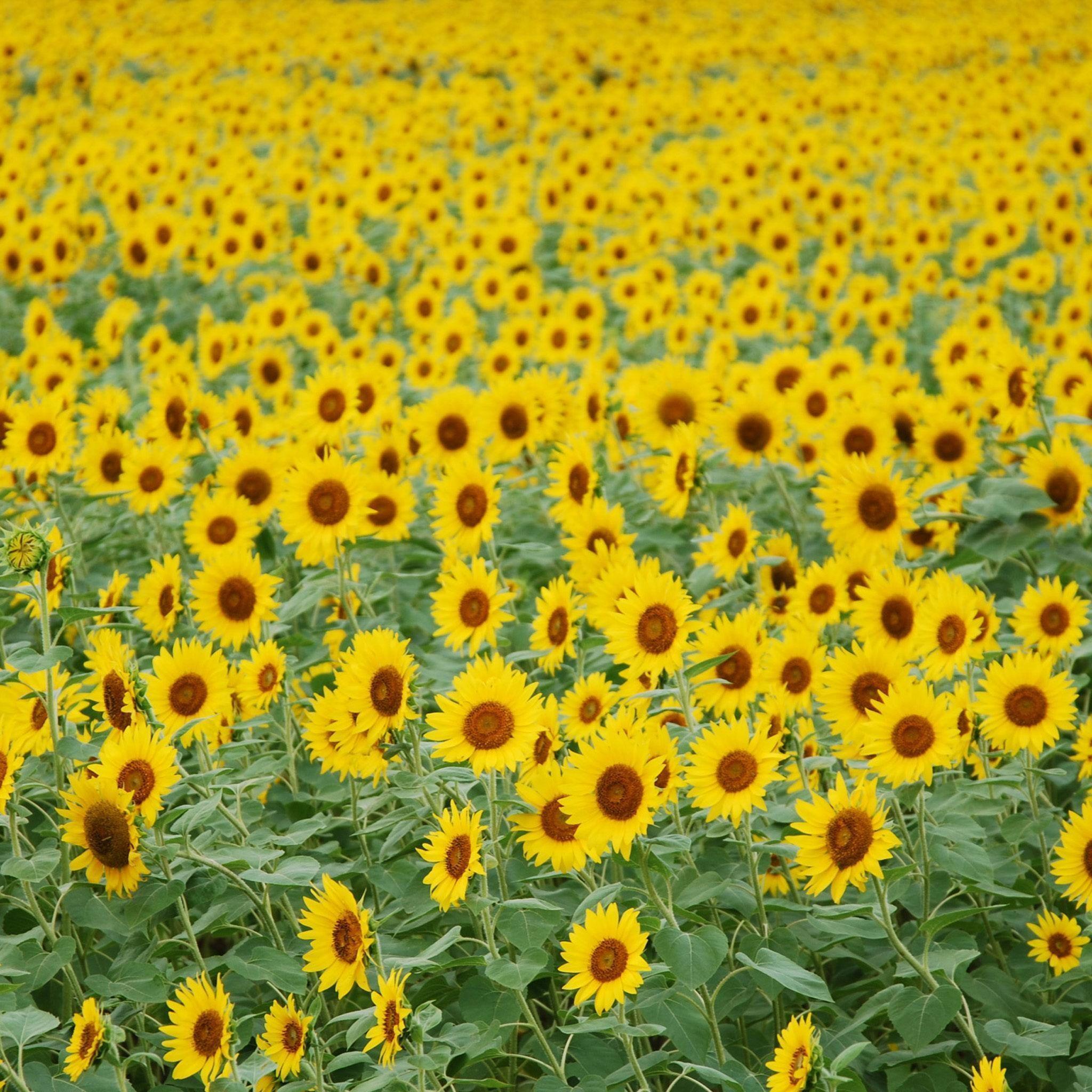 Gallery For Yellow Flower Garden