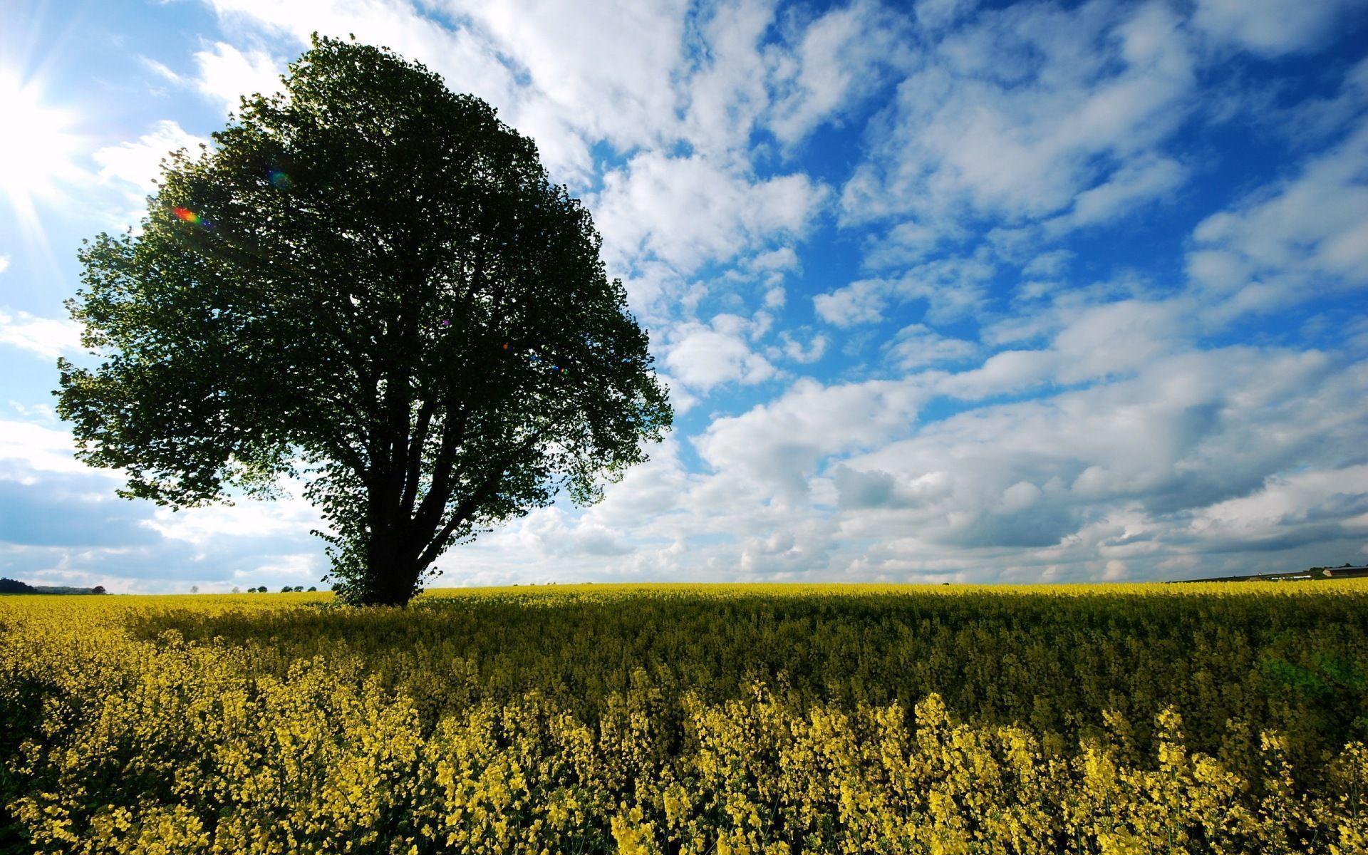 اروع صور من الطبيعة Best Nature Wallpapers Re4CYqt