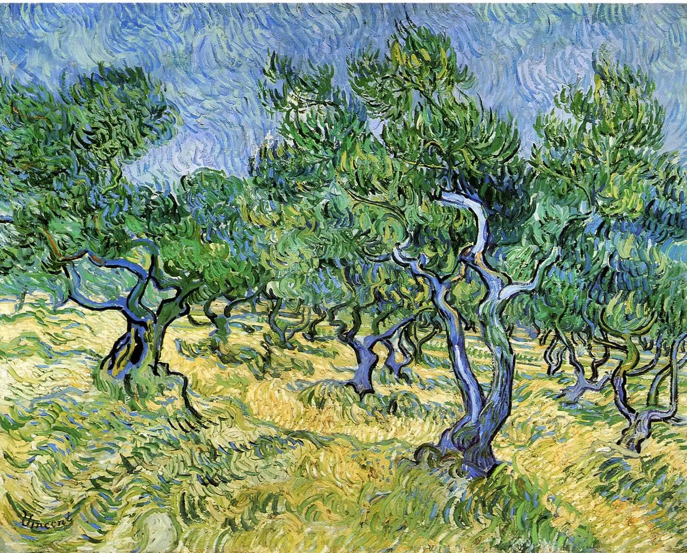 Olive Grove 2 - Vincent Van Gogh Paintings Wallpaper Image
