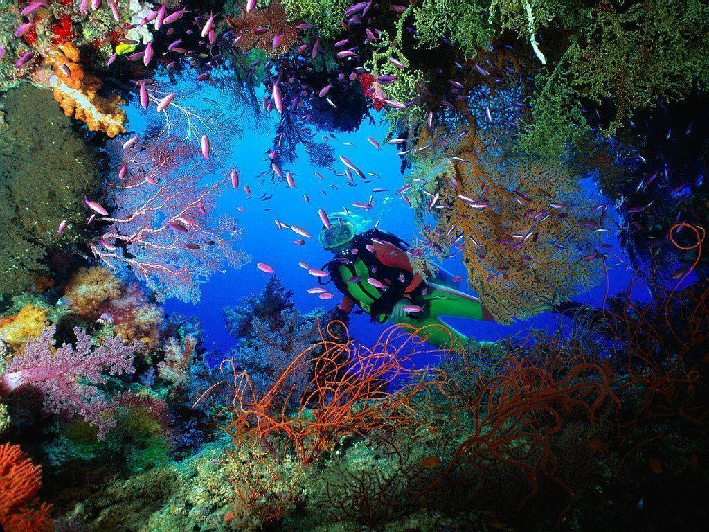 Free Scuba Diving Wallpapers - Wallpaper Cave