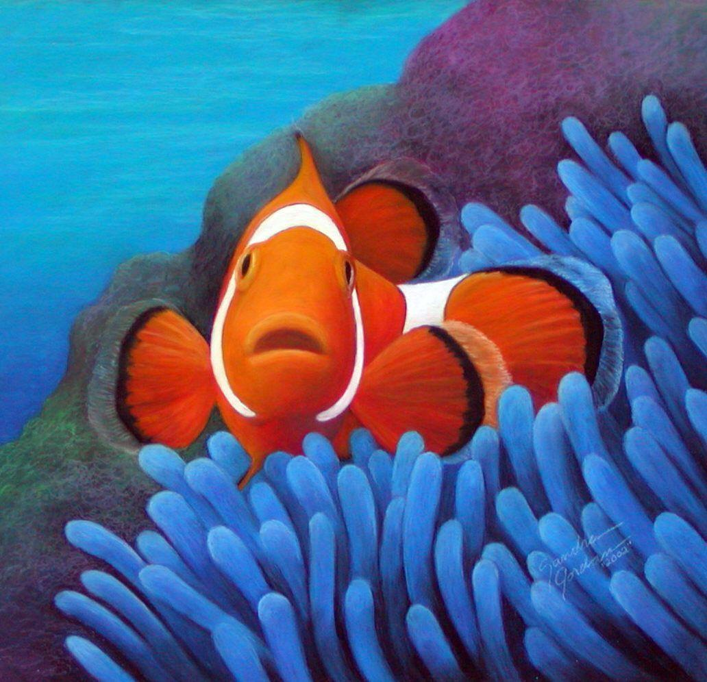 Clownfish Wallpapers Wallpaper Cave