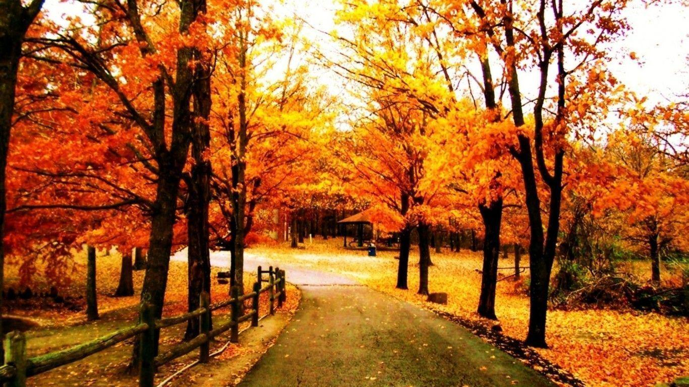 autumn trees wallpapers wallpaper cave