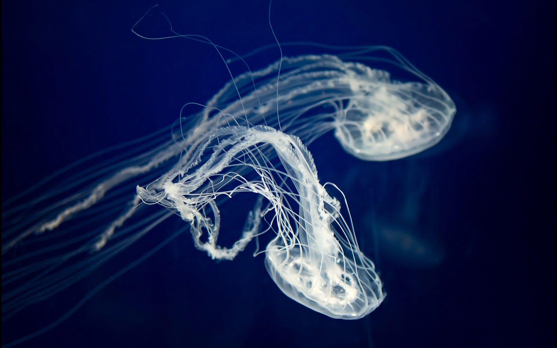 full hd wallpaper jellyfish - photo #13
