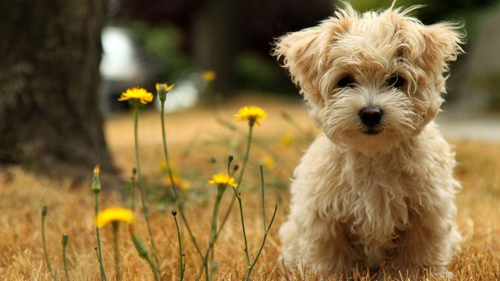 Wallpapers For > Cute Puppy Dogs Wallpapers