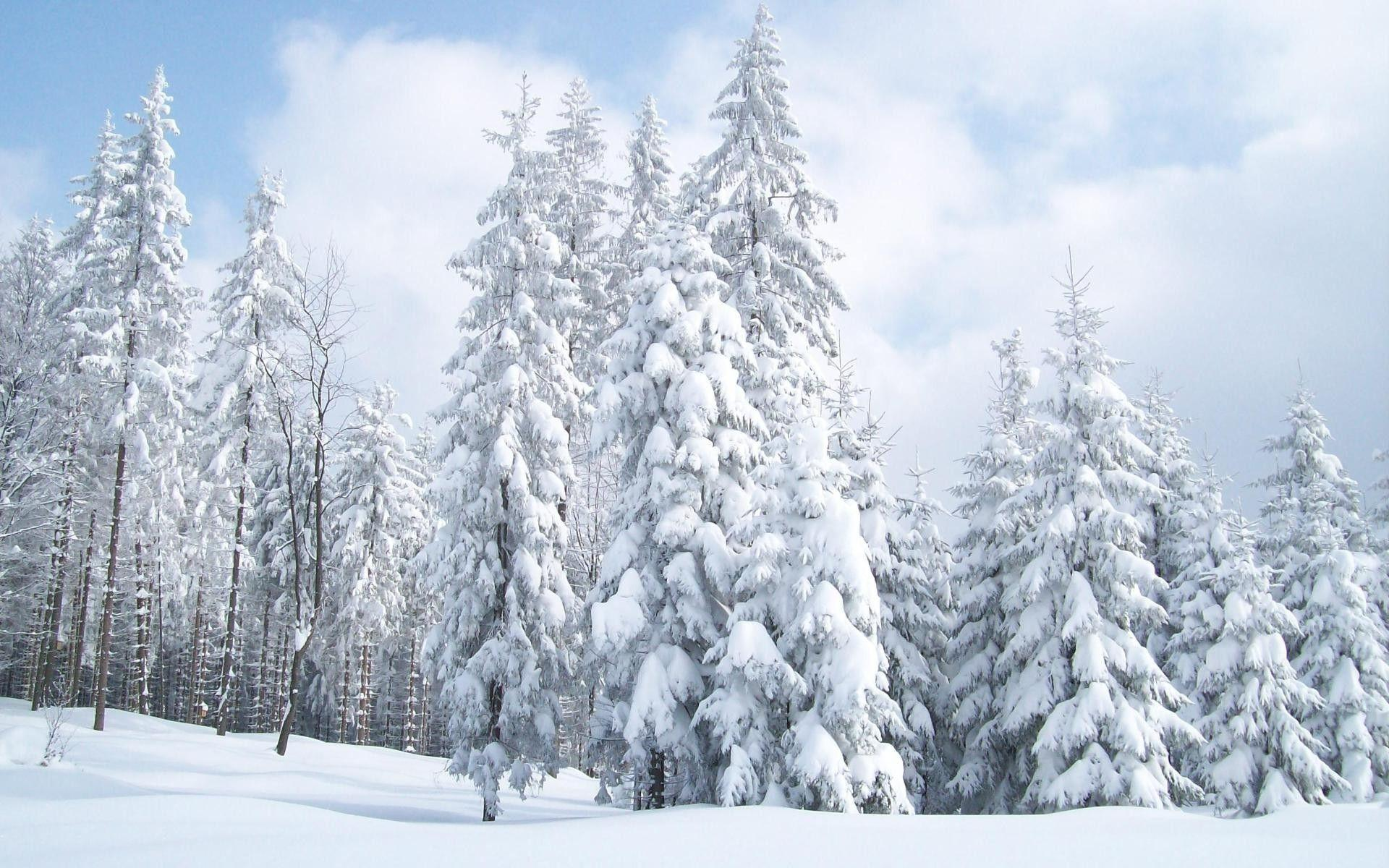 Snowy Trees Wallpapers - Wallpaper Cave