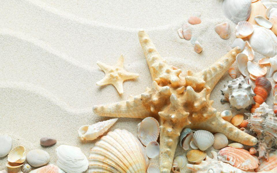 Pix For > Shells On The Beach Wallpapers