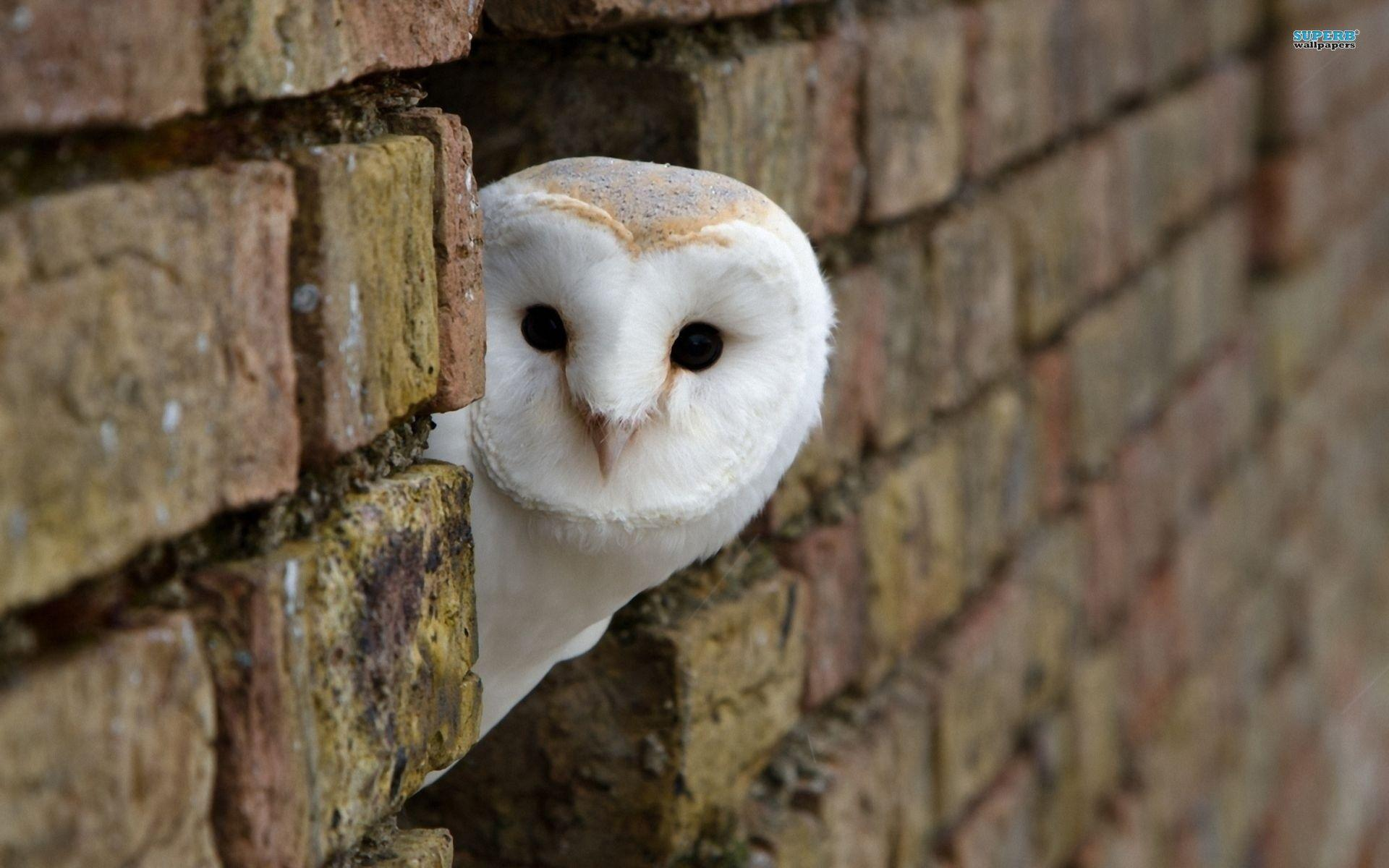 Interesting Owl Wallpaper Peeking Around Corner Building White ...