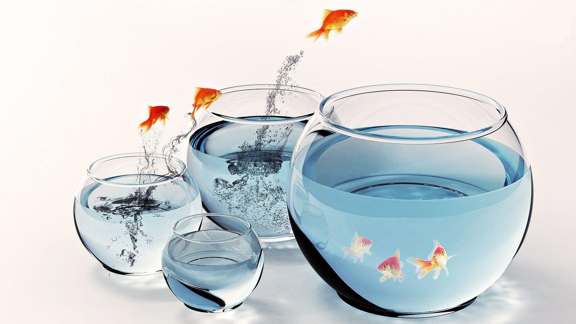 Fish aquarium kidderminster - Fish In Aquarium Desktop Wallpaper