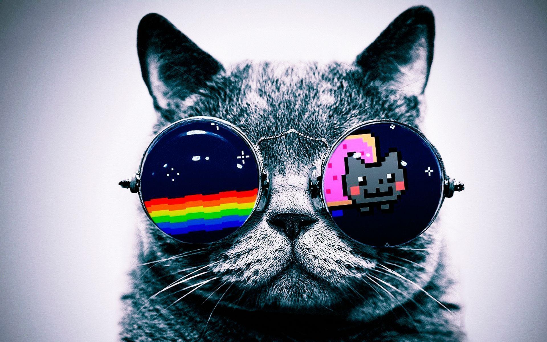 Cool Cat Wallpaper
