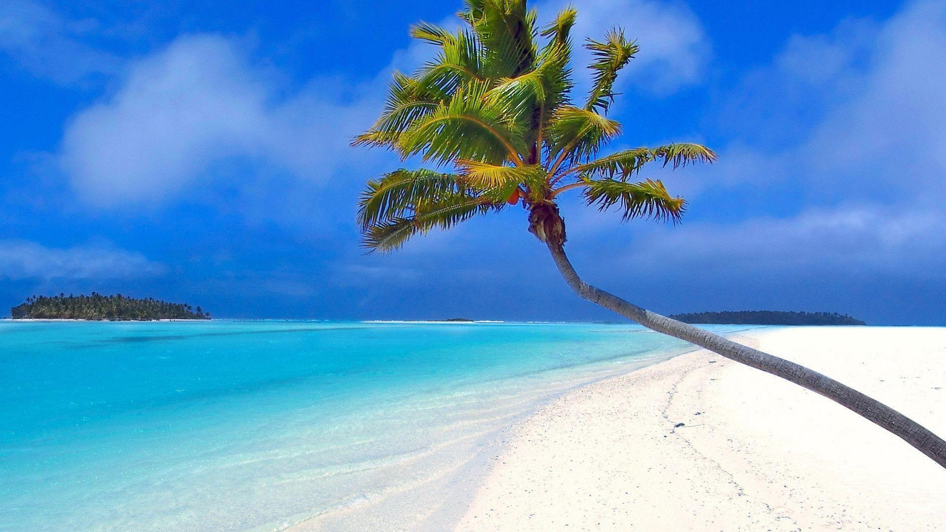 Beach by a coconut tree Wallpapers