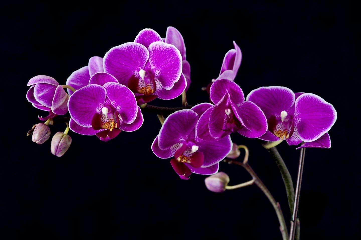 orchid wallpapers backgrounds images - photo #41