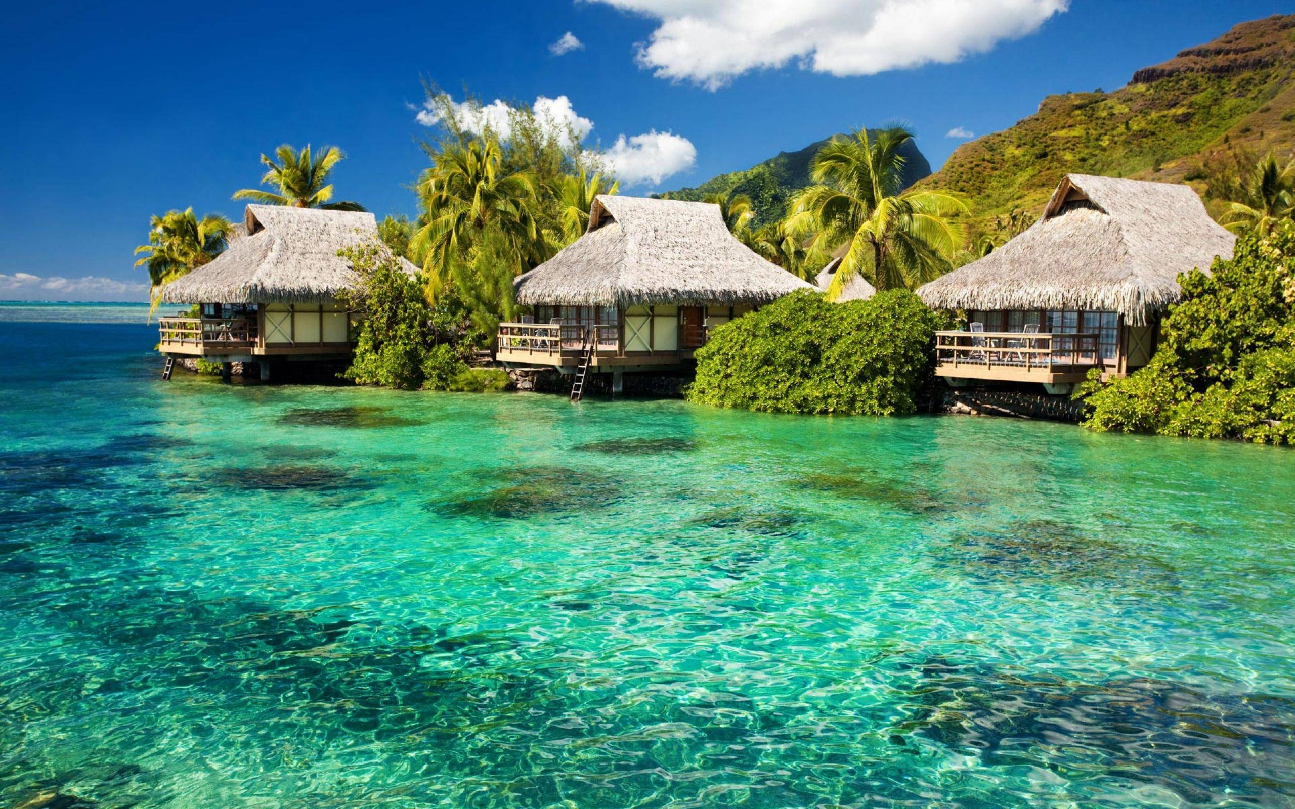 Exotic Beach Bungalows Free Wallpaper With 2560x1600 Resolution