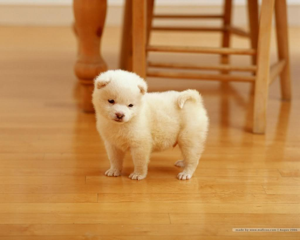 puppy wallpapers for desktop - www.
