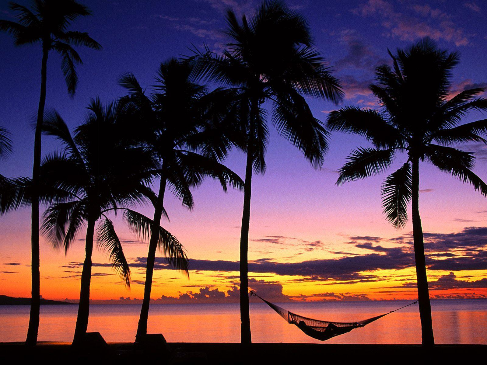 Palm Tree Beach Wallpapers