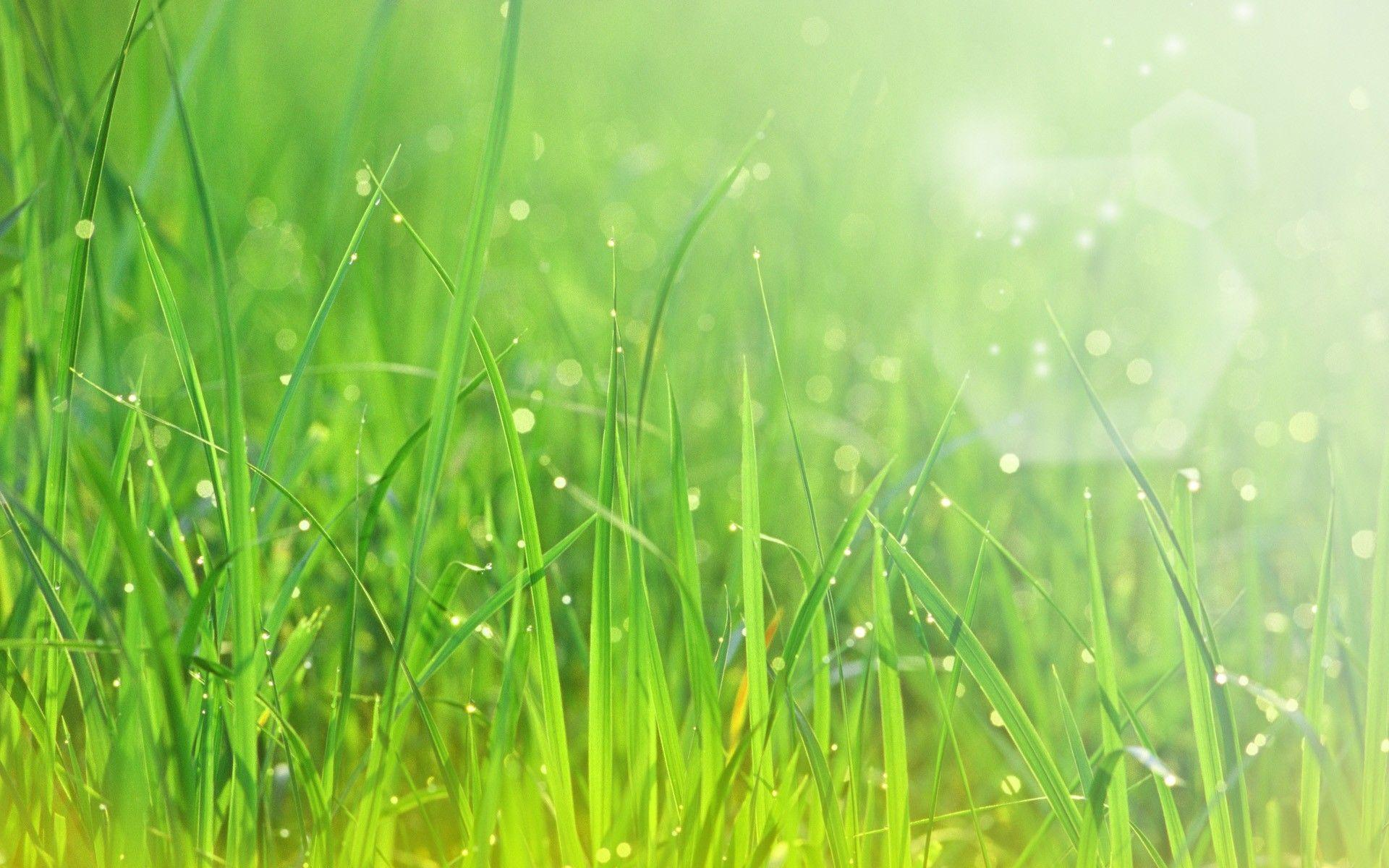 wallpapers for u003e green grass background hd grass background hd67 background