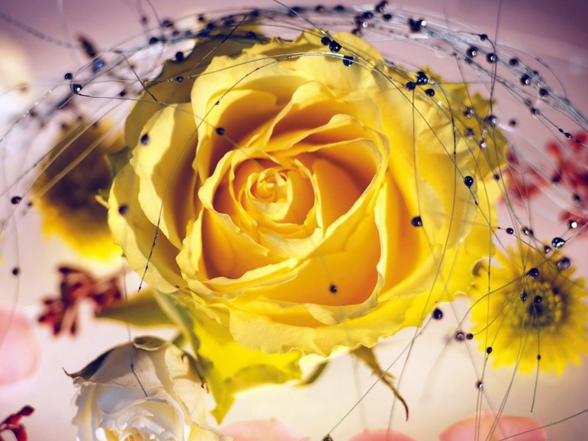 Desktop Backgrounds Animal Life Flowers Yellow Roses