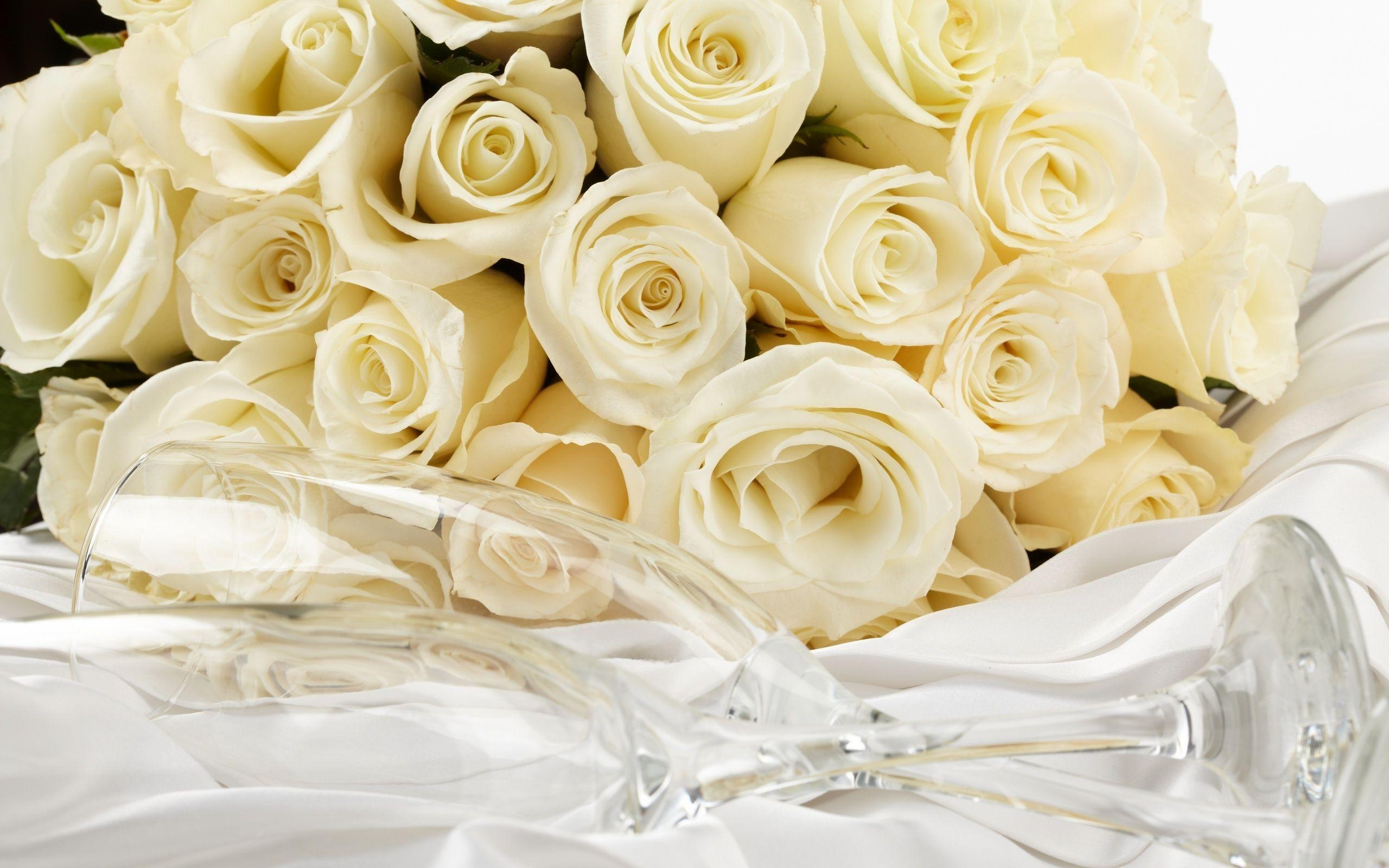 white rose backgrounds wallpapers - photo #3