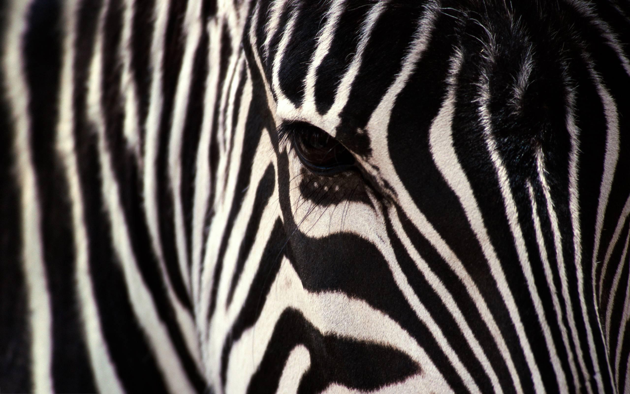 Zebra Backgrounds - Wa...