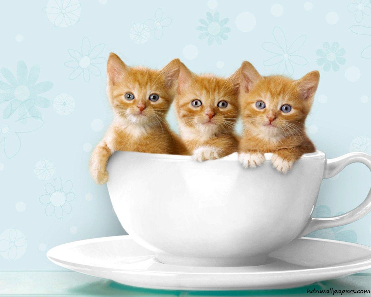 Free Kitten Wallpapers - Wallpaper Cave