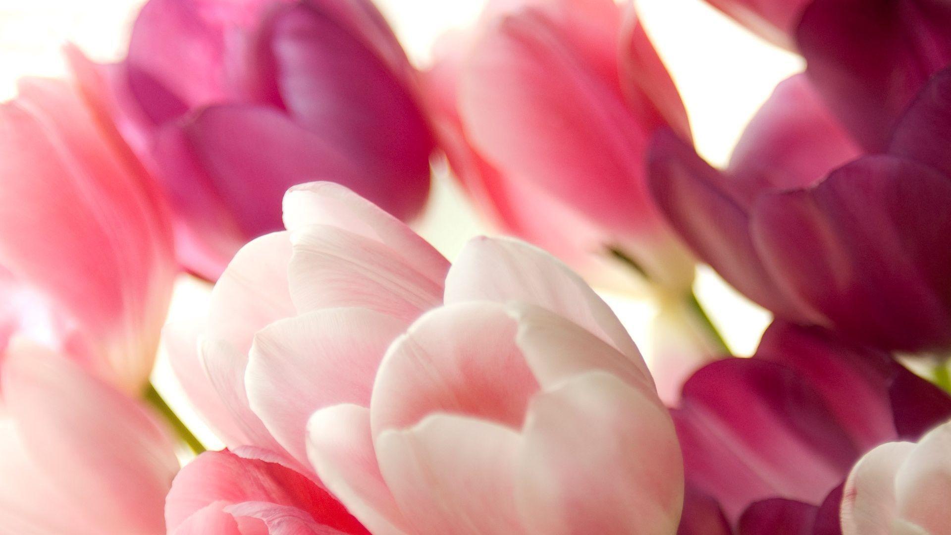 Фото цветов обои