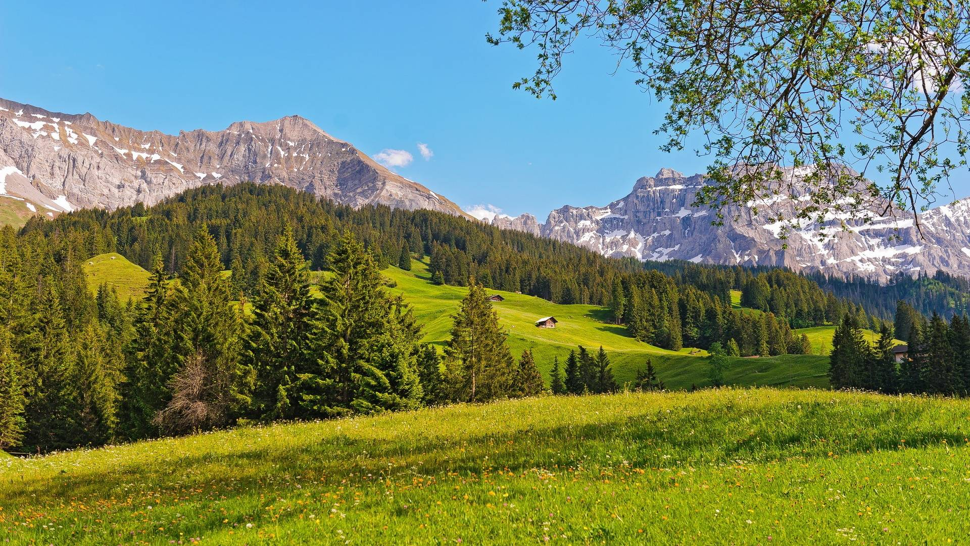 Summer Meadow Swiss Alps Wallpaper, iPhone Wallpaper, Facebook ...