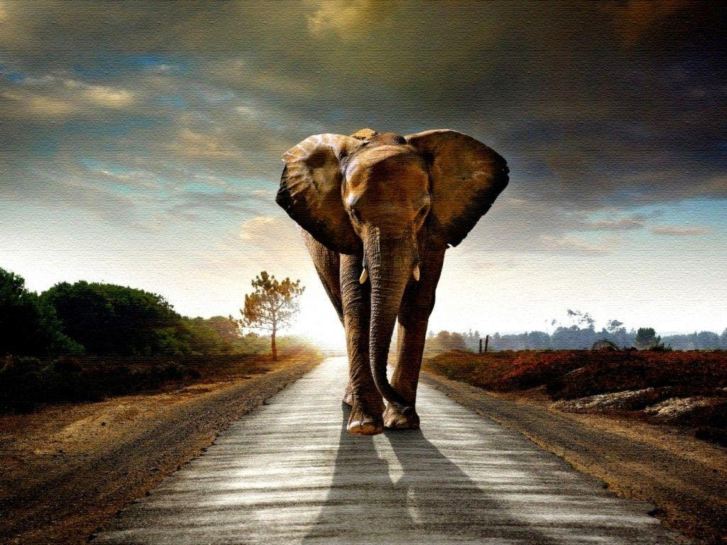 elephant_wallpapers_high_ ...