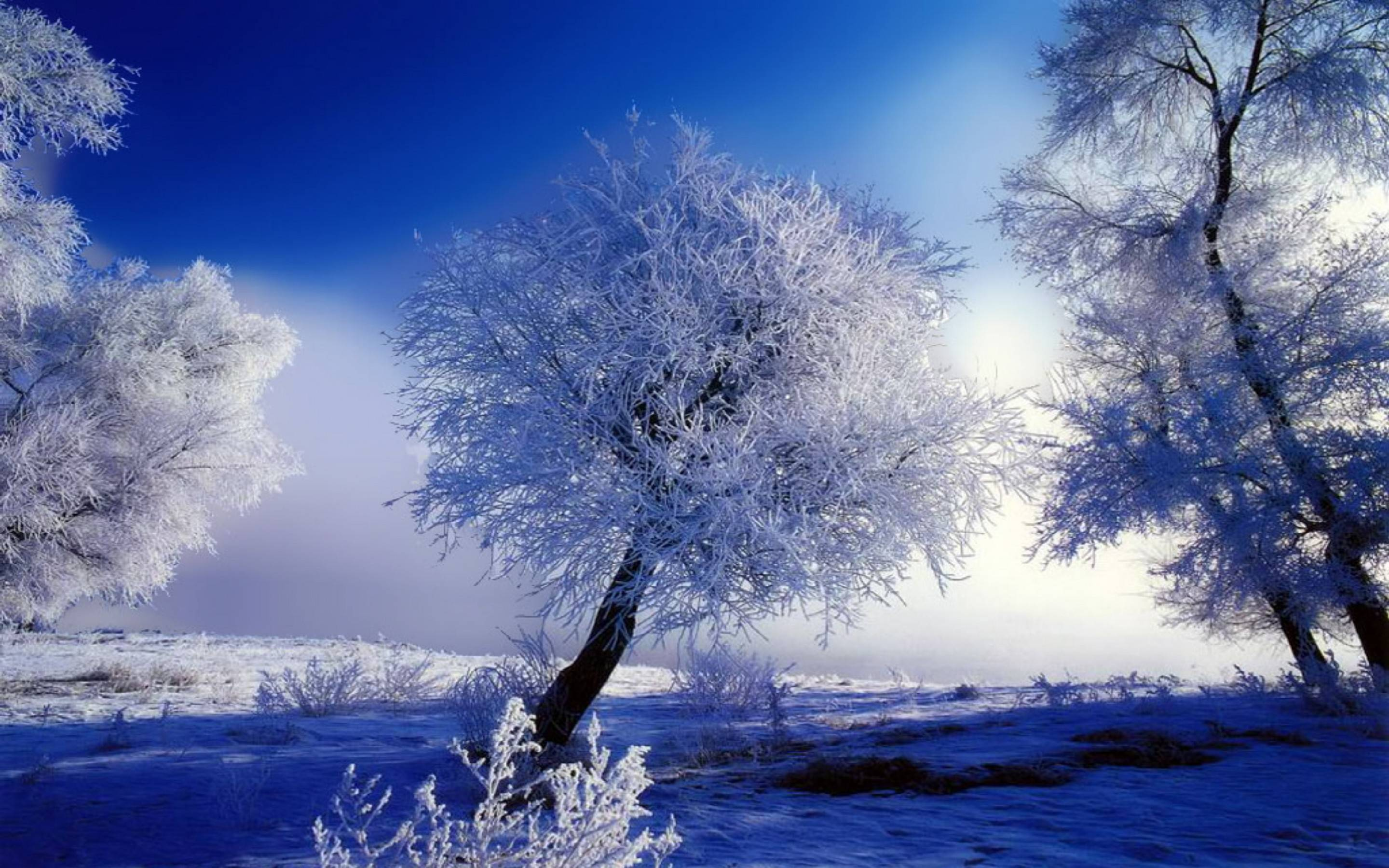 Beautiful Winter Snow HD Wallpapers